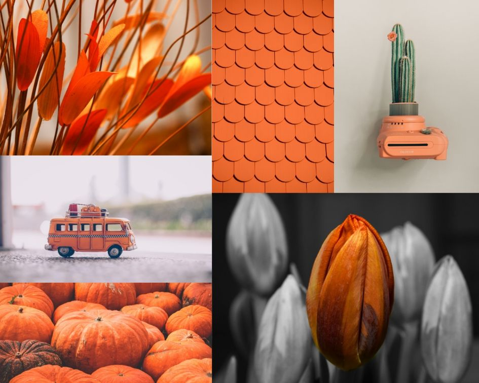orange color inspiration mood board